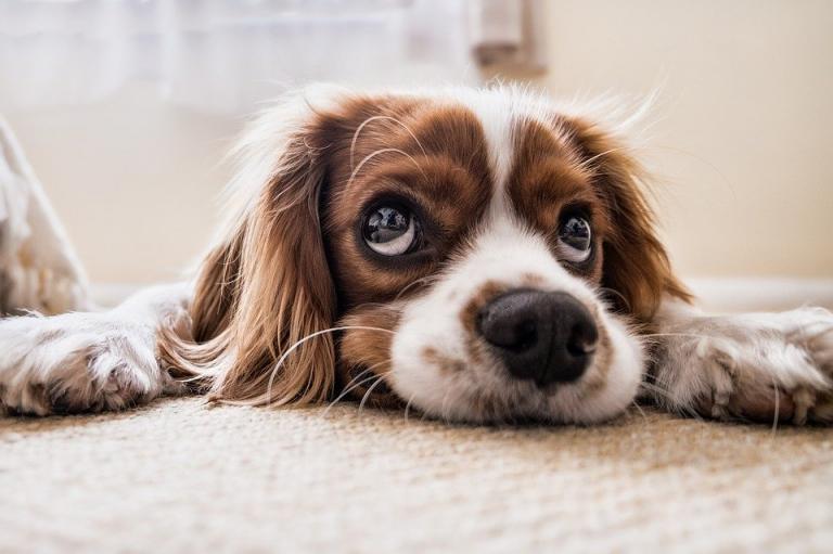 Защо е добра идея да имате куче и какви плюсове носи това